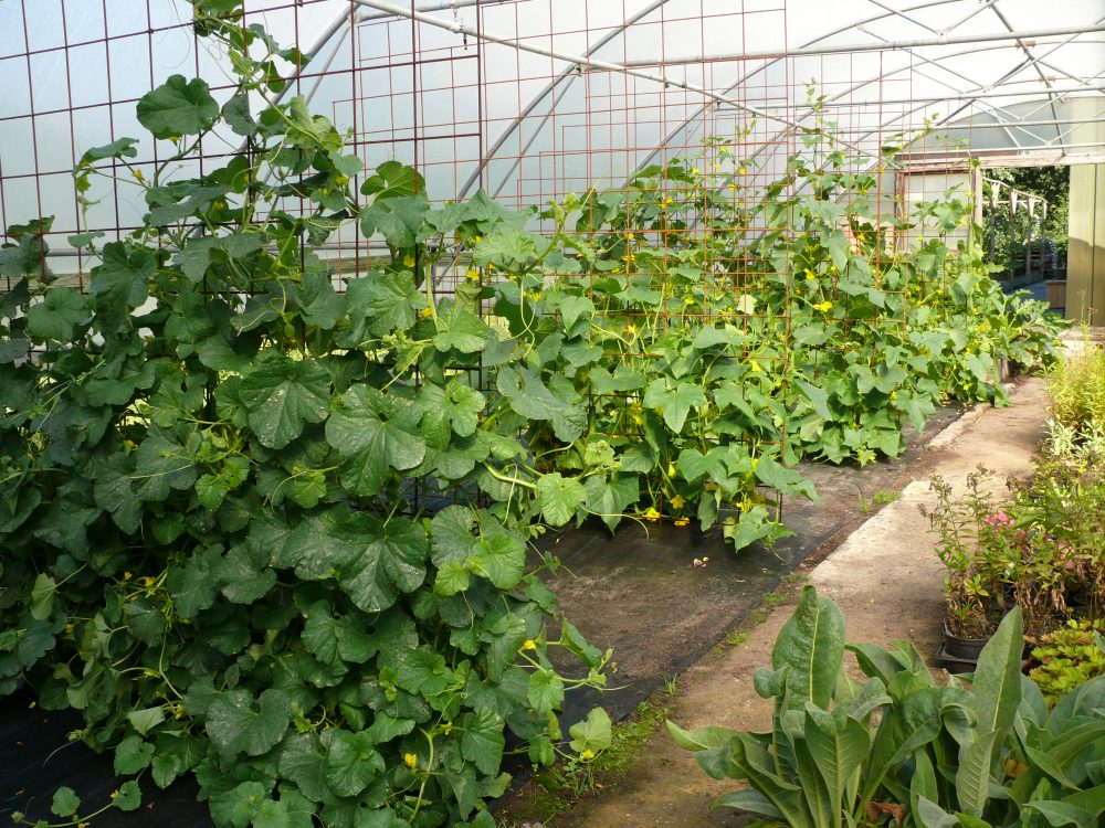 Minicamping met kwekerij groente
