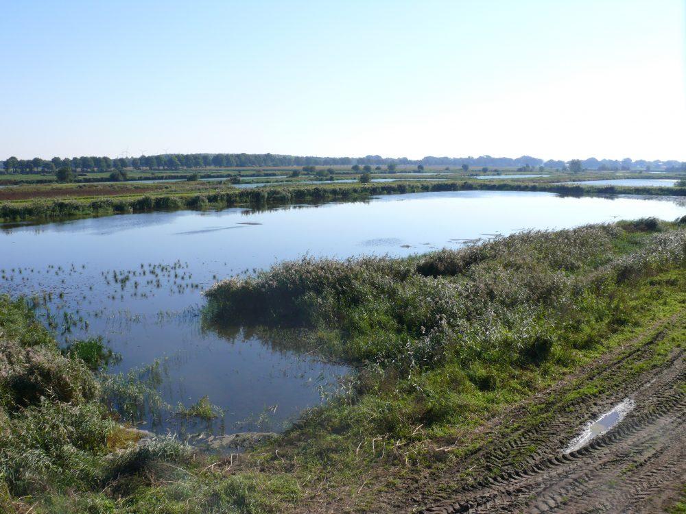 Minicamping natuur vloeivelden vogels De Krim